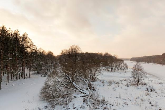 Снежная и покрытая льдом трава и другие растения зимой