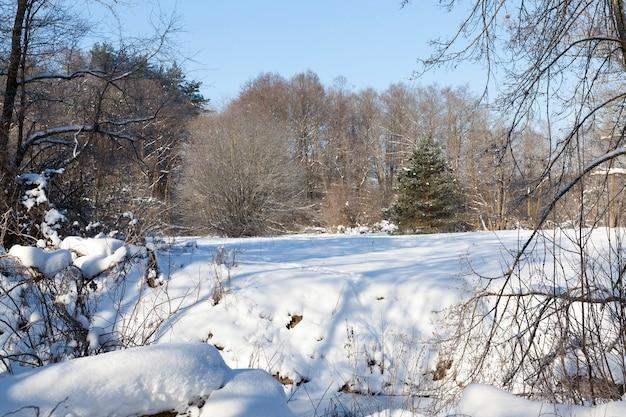 Снежные и покрытые льдом деревья и другие растения зимой