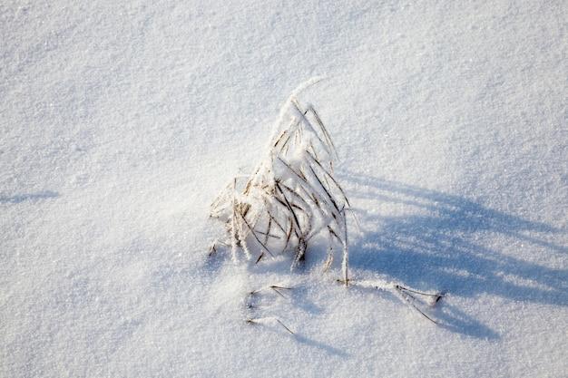 Снег и растения