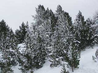 Neve in andorra