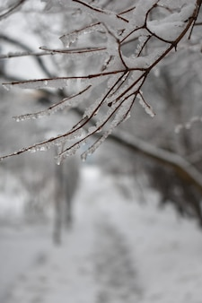 Snow on branches in the park in winter