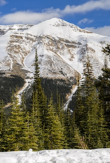 Snow capped canadian rocky mountains at banff national park in alberta, canada