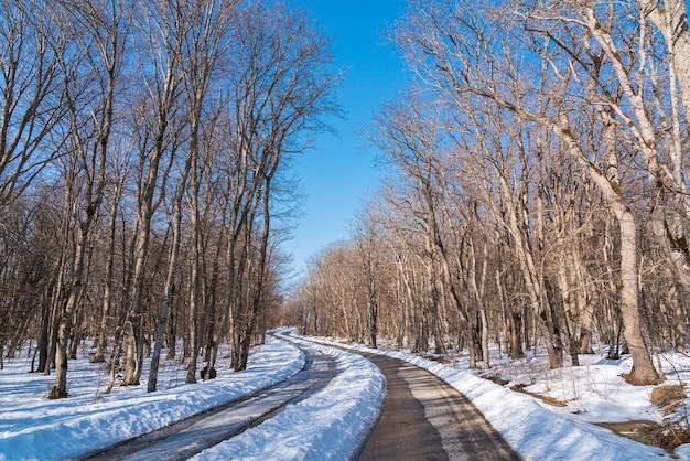 森の中の雪に覆われたアスファルト道路