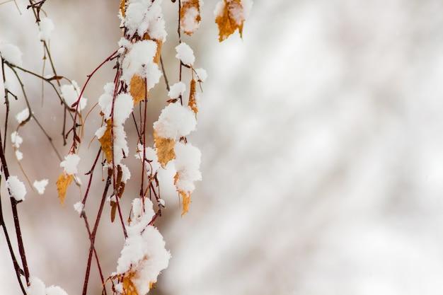 雪に覆われた白樺の枝は乾燥した葉で覆われています。 space_をコピーします