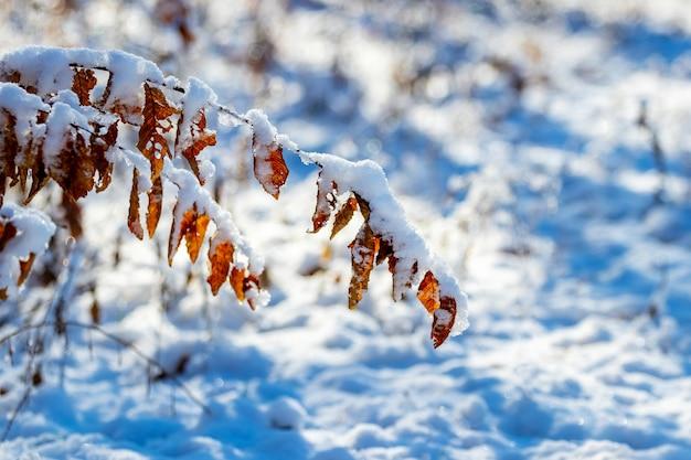 乾いた葉が地面に曲がっている雪に覆われた木の枝
