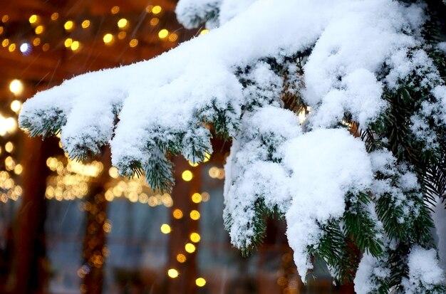 Заснеженная ветка ели и рождественский свет
