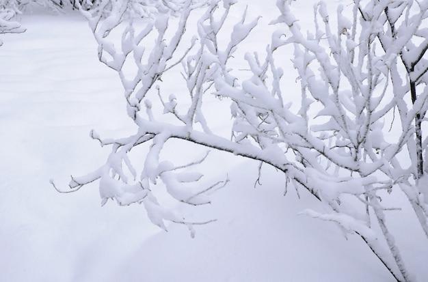 눈 배경에 눈 덮인 나뭇가지
