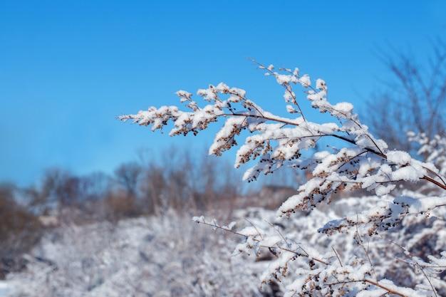 晴天の青空を背景に雪に覆われた植物の枝