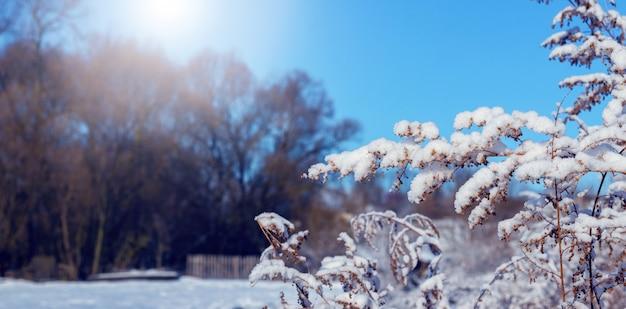 Заснеженные ветви растений на фоне деревьев в солнечную погоду, зимний вид