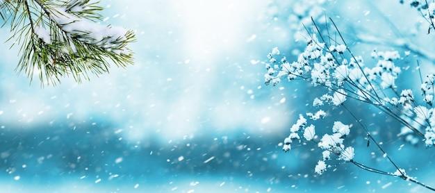 降雪時に森の中でぼやけた背景にある植物の雪に覆われた枝