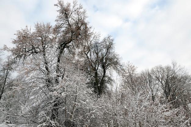 겨울철 눈 덮인 나뭇 가지. 흐린 날씨, 햇빛 없음