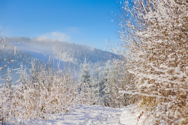 Snow covered bush in winter mountains