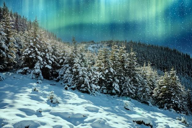 눈 덮인 카르파티아 산맥과 언덕에는 백설 공주의 거대한 눈 더미와 북극의 차가운 조명이 비추는 상록수 크리스마스 트리가 있습니다.