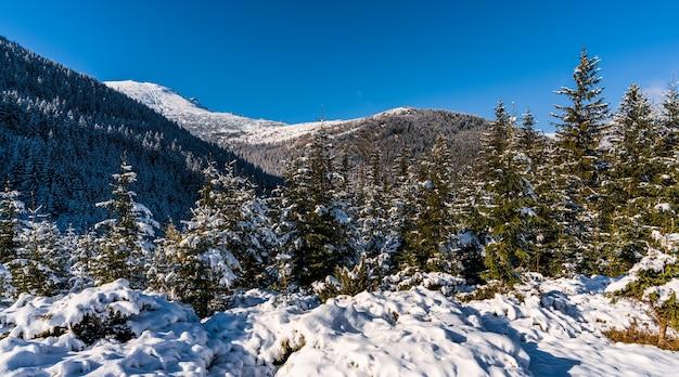 눈 덮인 카르 파티 아 산맥과 거대한 눈 더미가있는 백설 공주와 상록수 크리스마스 트리가있는 언덕