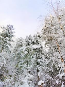 冬の森の雪に覆われた針葉樹。青空。冬、寒さ、霜の概念。コピースペース。縦の写真。