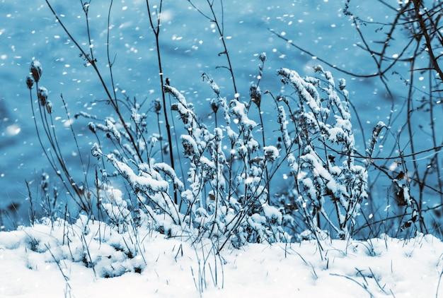 川岸の植物の雪に覆われた乾燥した枝