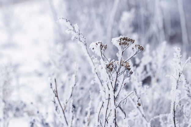 눈 덮인 마른 식물. 겨울 크리스마스와 새 해 배경