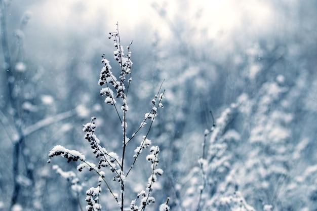 Заснеженные сухие стебли дикорастущих растений на размытом фоне