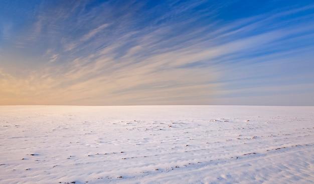 雪に覆われた畑-雪に覆われた農地。冬の季節。ベラルーシ