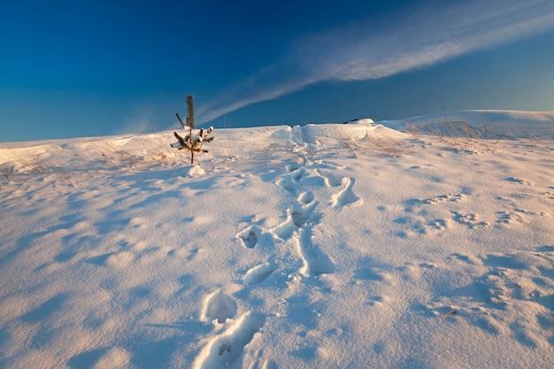 雪に覆われた畑-雪に覆われた農地。冬の季節。