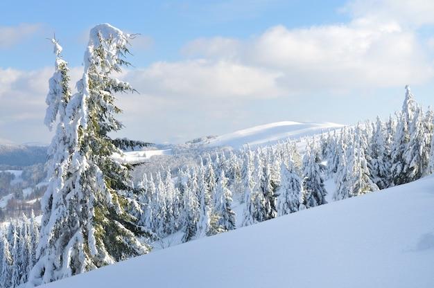 Заснеженные ели, зимний пейзаж фон, облачное небо, дикая природа