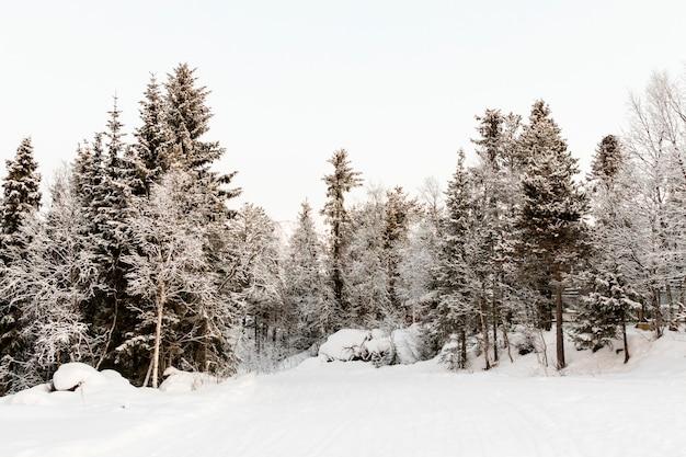 スウェーデン北部の雪で覆われた森林 Premium写真