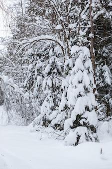 눈 덮인 숲길은 눈의 무게로 나무가 처져 도로 위에 자연 아치를 만듭니다. 겨울 자연 배경입니다. 디자인을 위한 겨울 자연의 개념입니다.