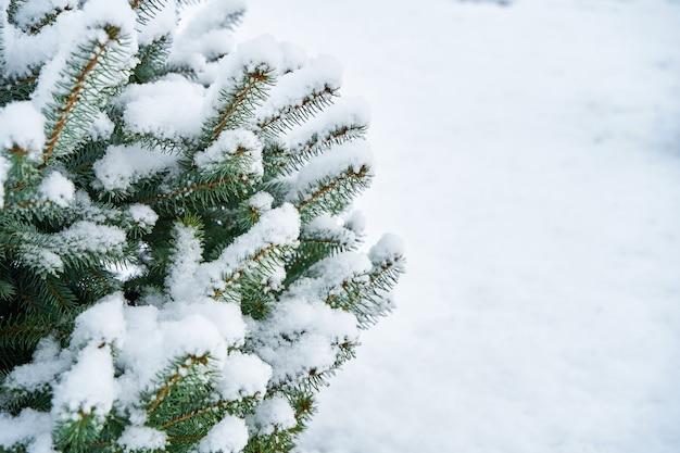 Заснеженная зеленая ель в зимнем городском парке.