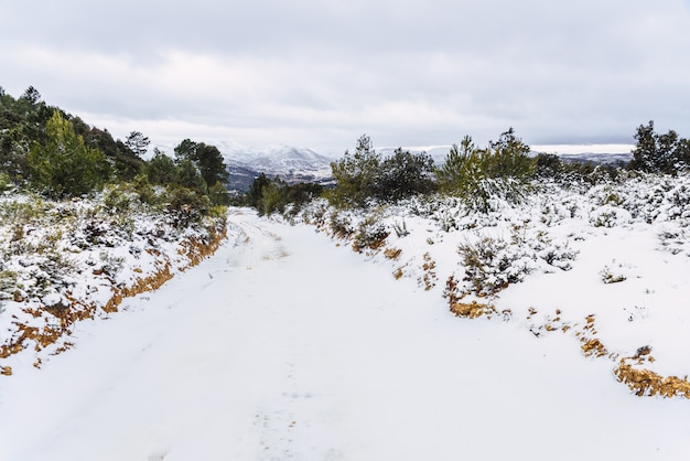 雪に覆われた登山道が車両でブロックされています。