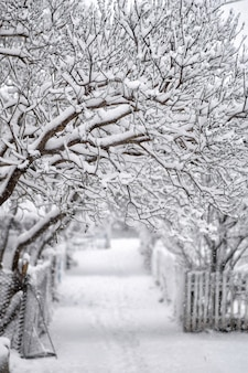 Snow-covered path and trees in the snow