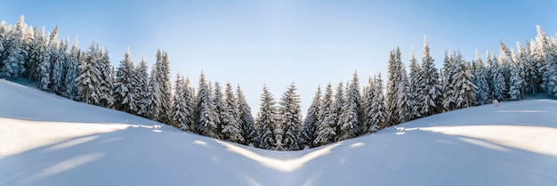 Snow covered pine trees landscape