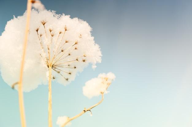Заснеженные растения против неба. красивый зимний фон