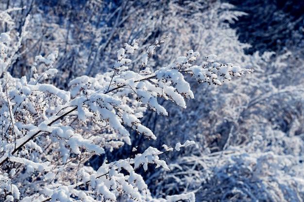 화창한 날씨에 숲에서 눈 덮인 식물