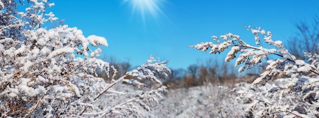 Заснеженные растения в саду в солнечный зимний день. зимний вид