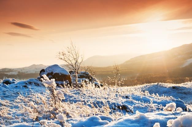 Заснеженные растения в горах на закате. красивый зимний пейзаж.
