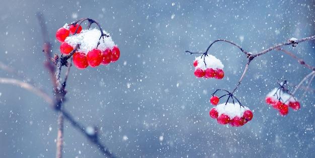 Заснеженные красные ягоды калины на синем фоне во время сильного снегопада