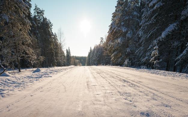 Заснеженная дорога в хвойном лесу
