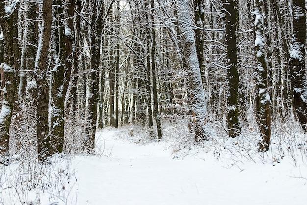 冬の森の雪道、冬の風景