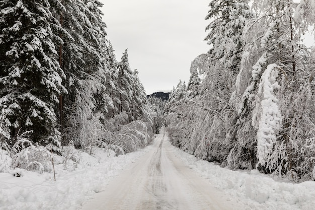 Snow covered road in a scandinavian pinewood forest with snowy forest floor and pine tree stems, pinus sylvestris.
