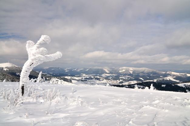 Заснеженное небольшое дерево на фоне гор. северная красота, дикая природа, отдых в горах