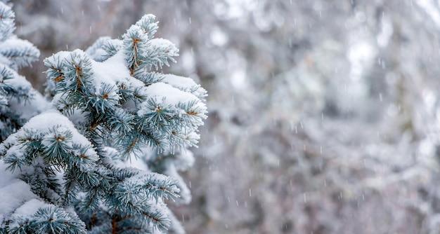 降雪時に木の背景に雪に覆われたトウヒの枝、コピースペース_