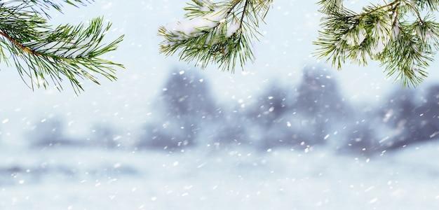 Заснеженные еловые ветки во время снегопада