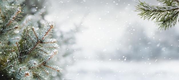 降雪時の森のぼやけた背景に雪に覆われたトウヒの枝