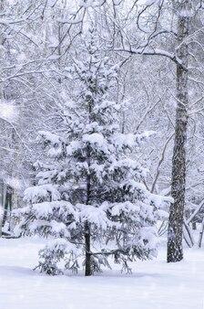 강설량 동안 겨울 공원에서 눈 덮인 가문비나무