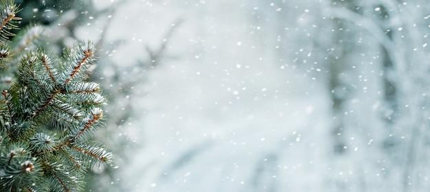 Заснеженная ель в зимнем лесу во время снегопада