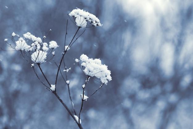 ぼやけた背景の乾燥した植物の雪に覆われた茎