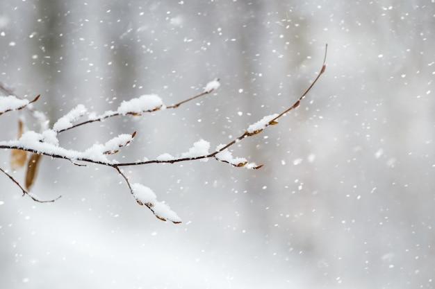 降雪時の森の中の雪に覆われた木の枝