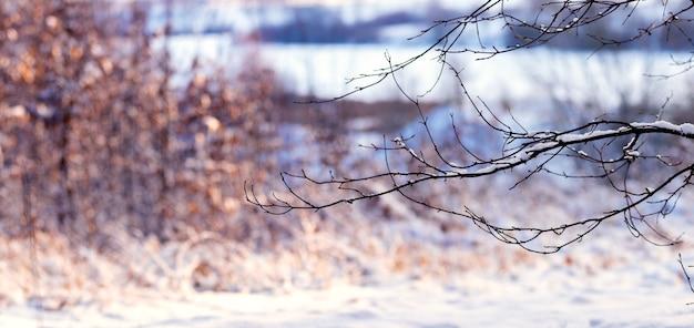 Заснеженная ветка дерева в лесу у реки на размытом фоне