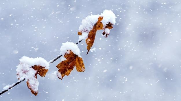 降雪時の明るい背景の冬の森の雪に覆われた木の枝
