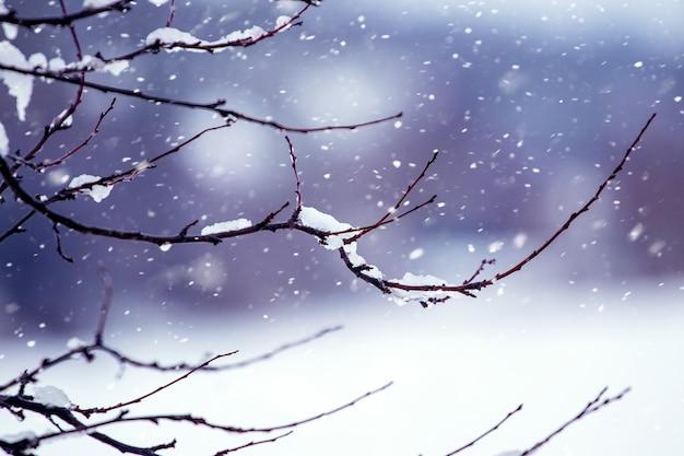 冬の森の雪に覆われた木の枝